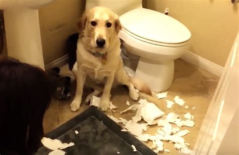 They're All Guilty, But Watch What This Dog Does… LOL