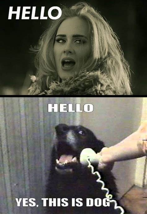 28 Adele Hello Meme Pictures Because You Really Didn't