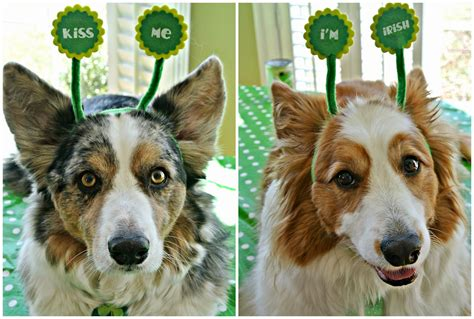 The Chronicles of Cardigan: A Corgi Limerick for Ye: Out